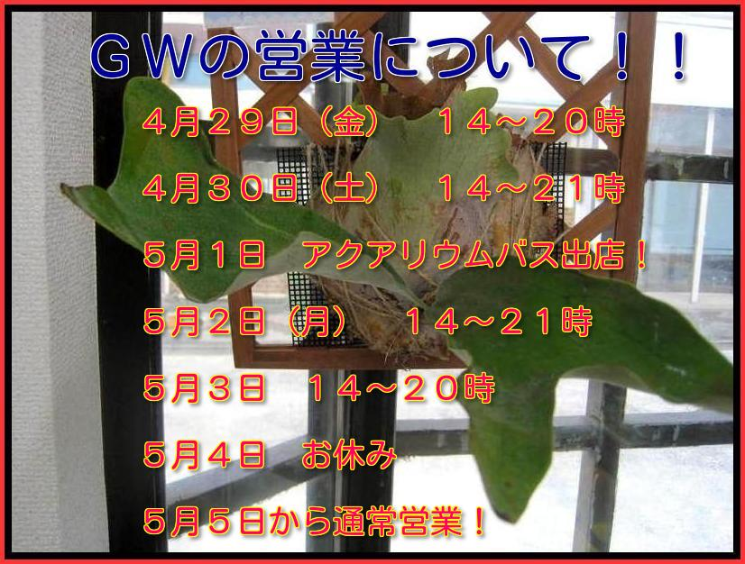 e0254814_172711.jpg