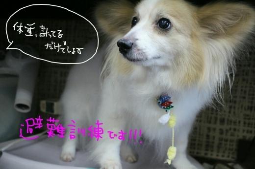 b0130018_10115184.jpg
