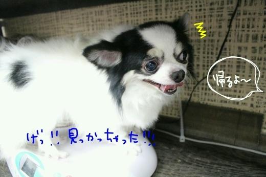 b0130018_10240863.jpg