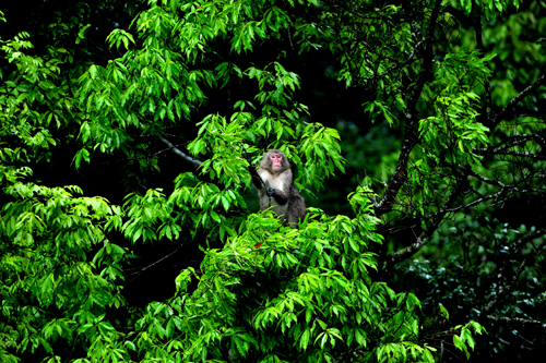 神々の森の源流紀行 二十四節気「野猿」_b0169522_22152395.jpg
