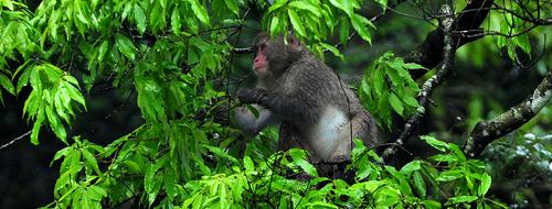 神々の森の源流紀行 二十四節気「野猿」_b0169522_2215412.jpg