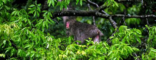 神々の森の源流紀行 二十四節気「野猿」_b0169522_2215614.jpg