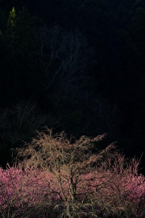 桜のわき役_f0050534_06485552.jpg