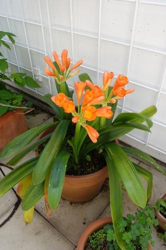 テラスの花々_c0070136_14120324.jpg