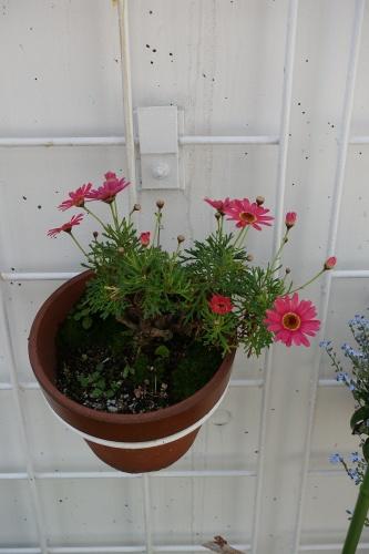 テラスの花々_c0070136_14121067.jpg