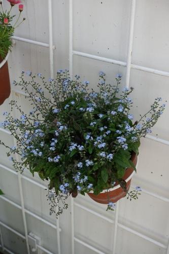 テラスの花々_c0070136_14121663.jpg