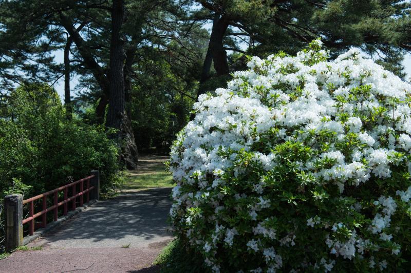 家内が好きだった公園 仏生山公園のツツジ_d0246136_00562799.jpg