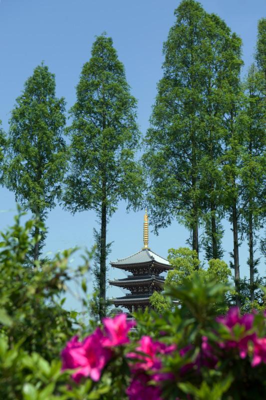 家内が好きだった公園 仏生山公園のツツジ_d0246136_00564310.jpg