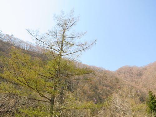 大川渓流ロードを遡る~北国の春(2)早春と春の境目~_b0206037_07265913.jpg