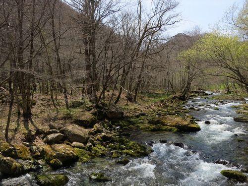 大川渓流ロードを遡る~北国の春(2)早春と春の境目~_b0206037_07265960.jpg