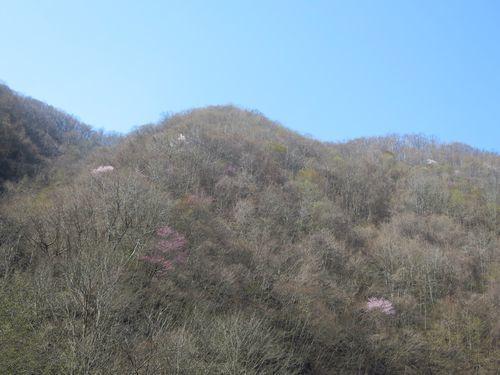 大川渓流ロードを遡る~北国の春(2)早春と春の境目~_b0206037_07265968.jpg