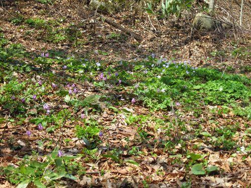 大川渓流ロードを遡る~北国の春(2)早春と春の境目~_b0206037_07270043.jpg
