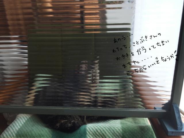 b0223446_12494729.jpg