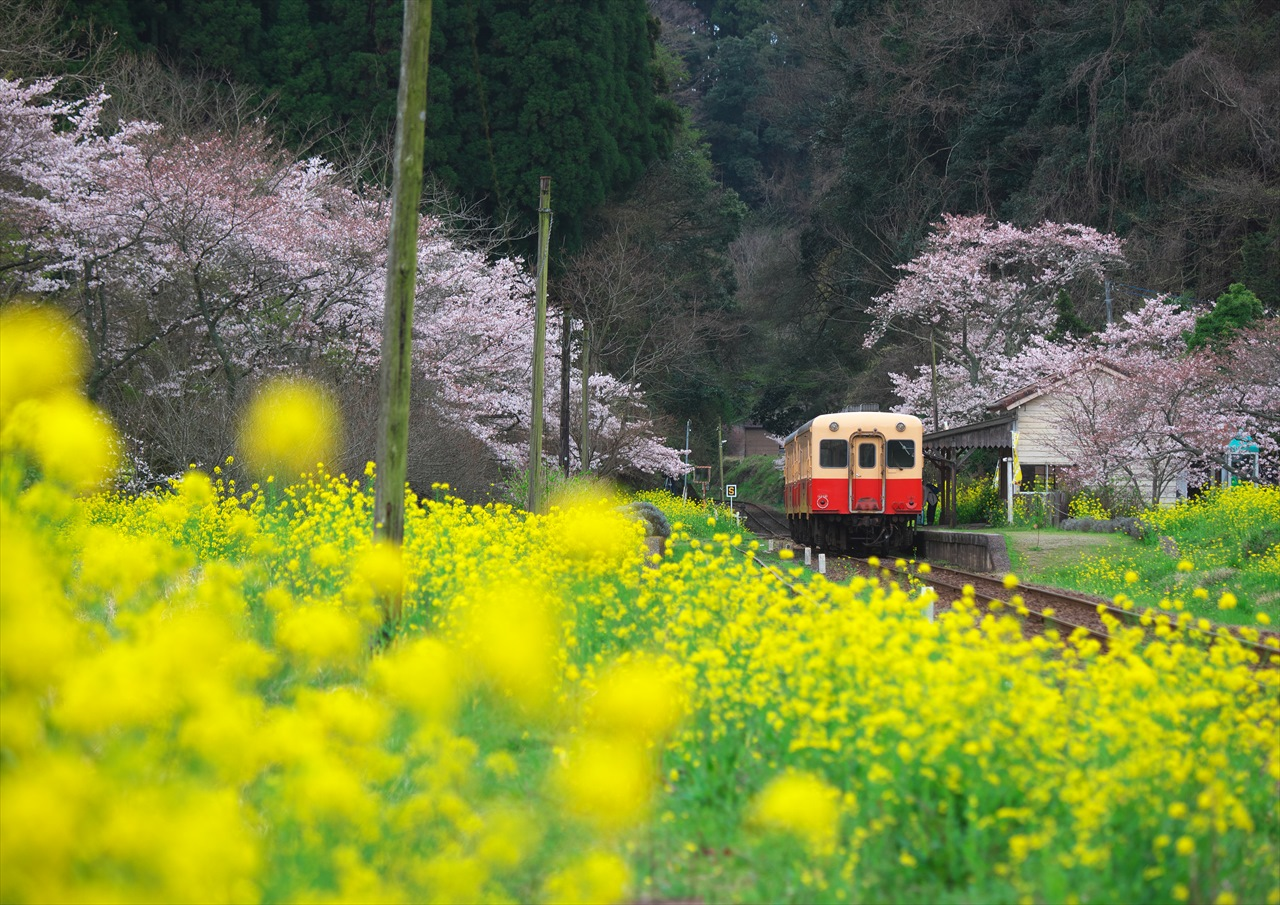 養花天 ~晩春の小湊鐡道~ 2_f0018464_7172418.jpg