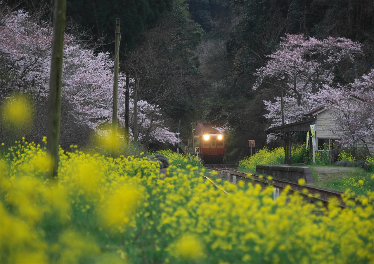 養花天 ~晩春の小湊鐡道~ 2_f0018464_78759.jpg