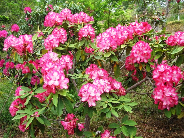 藤が咲き始めました_f0085369_1520645.jpg