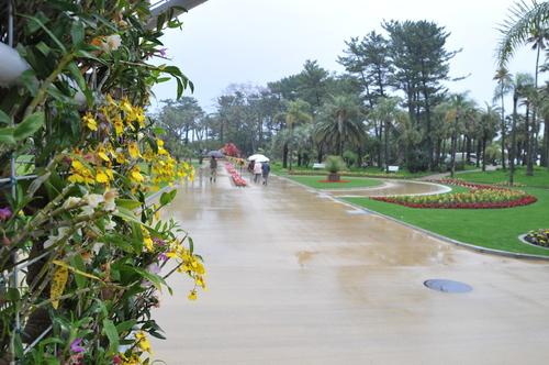 県立青島亜熱帯植物園 160426_a0043276_1929240.jpg