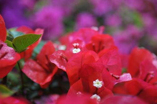 県立青島亜熱帯植物園 160426 002_a0043276_19322988.jpg