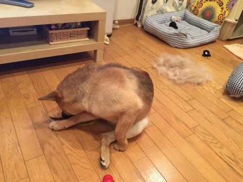 犬毛フェルトで桃太郎_c0364176_09432480.jpeg