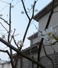 我が庭にも遅い春がやってきた。その1_b0213795_10334927.jpg