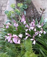 我が庭にも遅い春がやってきた。その1_b0213795_10341774.jpg