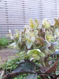 我が庭にも遅い春がやってきた。その1_b0213795_10344633.jpg