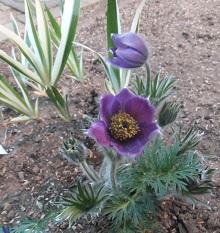 我が庭にも遅い春がやってきた。その1_b0213795_10355238.jpg