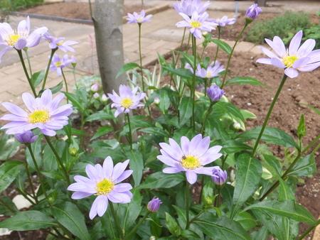 我が庭にも遅い春がやってきた。その2_b0213795_1041148.jpg