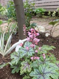 我が庭にも遅い春がやってきた。その2_b0213795_10412050.jpg