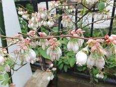 我が庭にも遅い春がやってきた。その2_b0213795_10413265.jpg