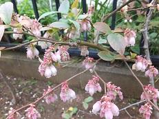 我が庭にも遅い春がやってきた。その2_b0213795_10415634.jpg