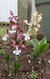 我が庭にも遅い春がやってきた。その2_b0213795_10421576.jpg