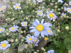 我が庭にも遅い春がやってきた。その2_b0213795_10455543.jpg