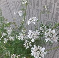 我が庭にも遅い春がやってきた。その2_b0213795_10515566.jpg