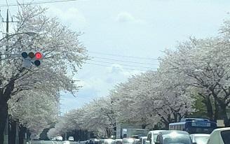 私の好きな、季節限定の風景。_b0213795_1057508.jpg
