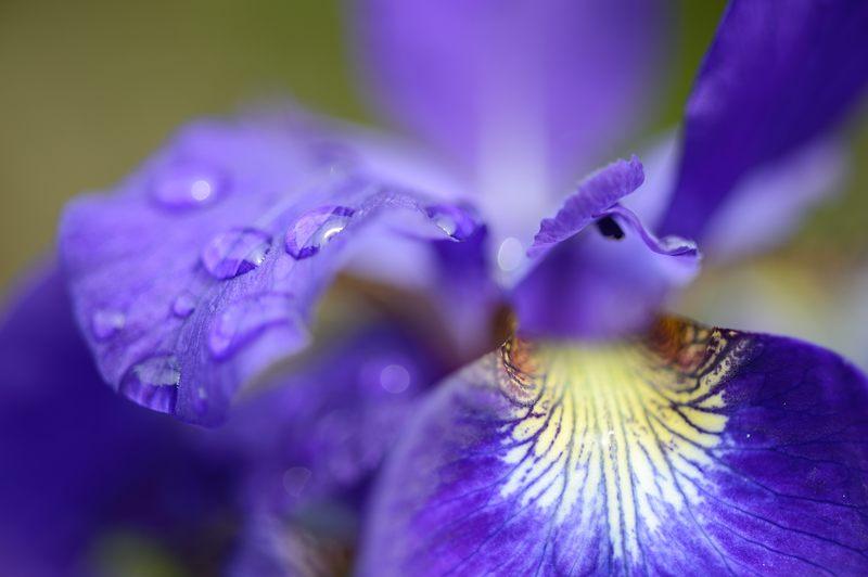 紫の花色々@梅宮大社_f0032011_1836486.jpg
