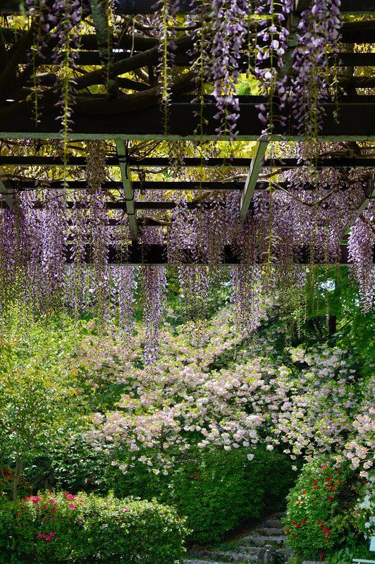 紫の花色々@梅宮大社_f0032011_18441739.jpg