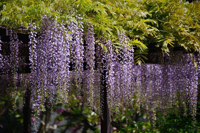 紫の花色々@梅宮大社_f0032011_1845141.jpg