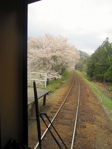 芝桜&わたらせ渓谷鉄道 @群馬_b0157216_21512368.jpg
