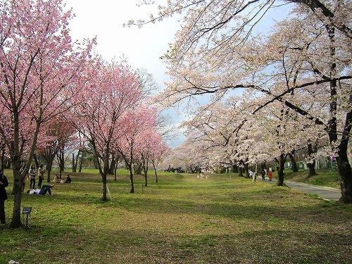 芝桜&わたらせ渓谷鉄道 @群馬_b0157216_21551073.jpg