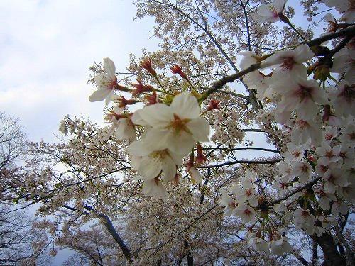 芝桜&わたらせ渓谷鉄道 @群馬_b0157216_23102795.jpg