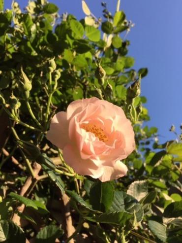 咲いてきました♪_d0085018_2145469.jpg