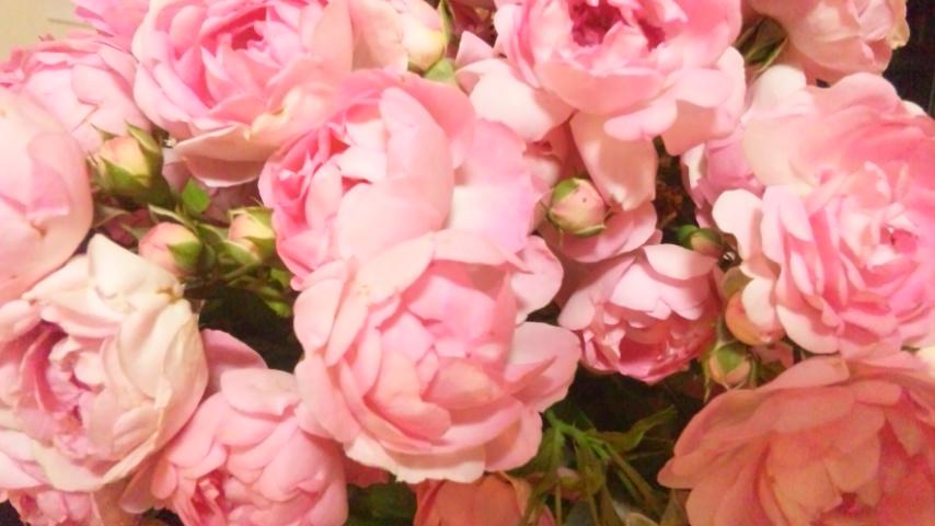 咲いてきました♪_d0085018_2210277.jpg