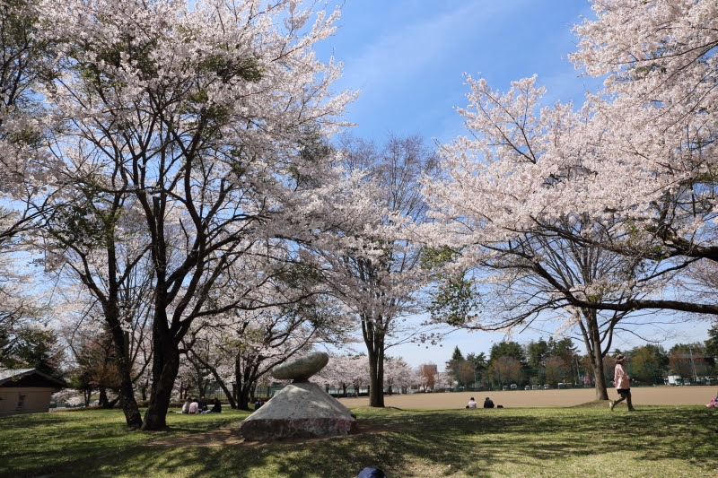 4月20日 雪窓公園の桜_d0035921_14325588.jpg