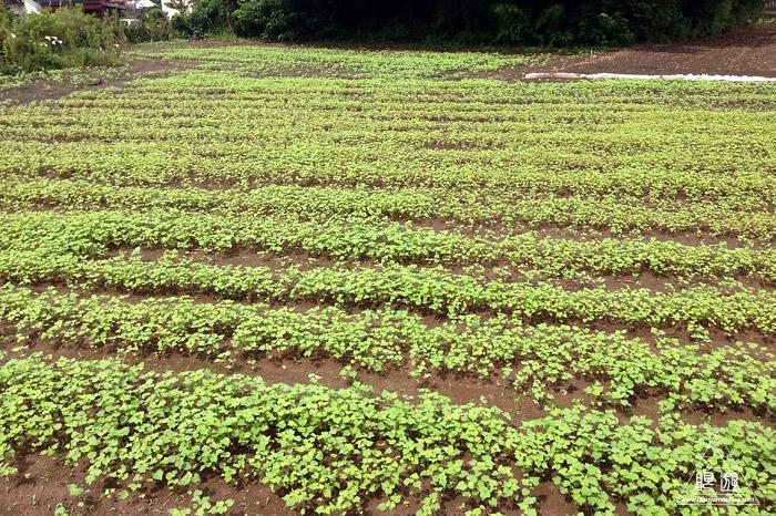 425 八束町 ~農作業体験~_c0211532_12372487.jpg