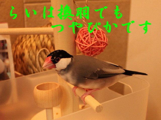 c0365734_21403081.jpg