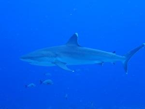 タヒチ~ランギロアブルーの海へ③_f0233340_23541249.jpg