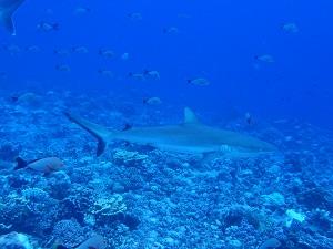 タヒチ~ランギロアブルーの海へ③_f0233340_23544719.jpg