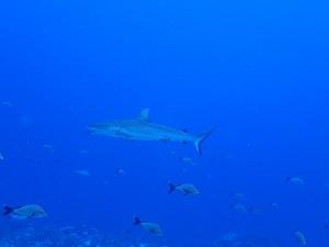 タヒチ~ランギロアブルーの海へ③_f0233340_23594697.jpg