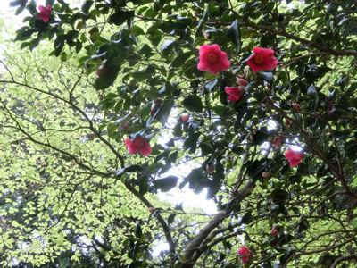 いよいよ緑の美しい季節♪_f0019247_1119253.jpg